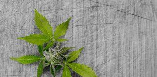 Cannabis-store-ancona